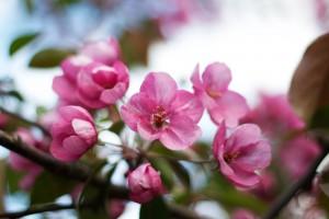kvetouci_strom