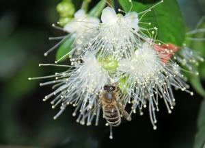 Včela na květině