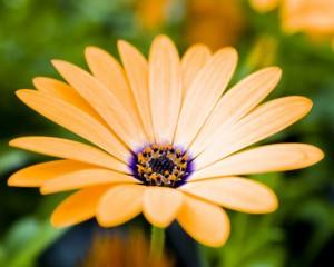 Elegance žlutého květu