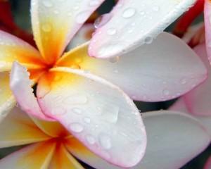 Rosou pokropená krása
