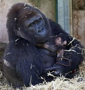 Gorily