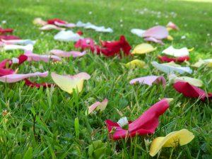 rose-petals1