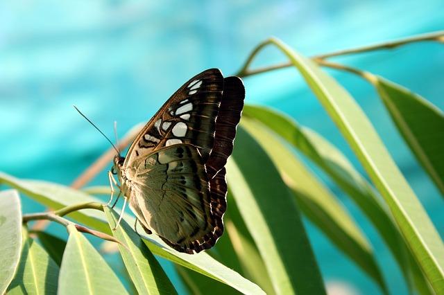 butterfly-730430_640