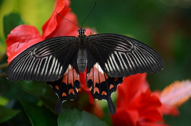 butterfly-546247_640