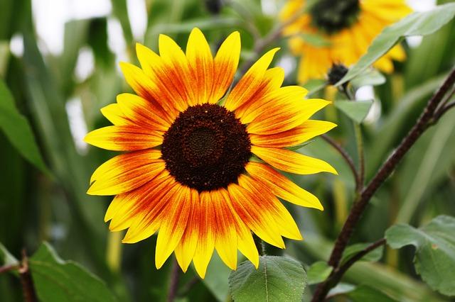 flower-116792_640