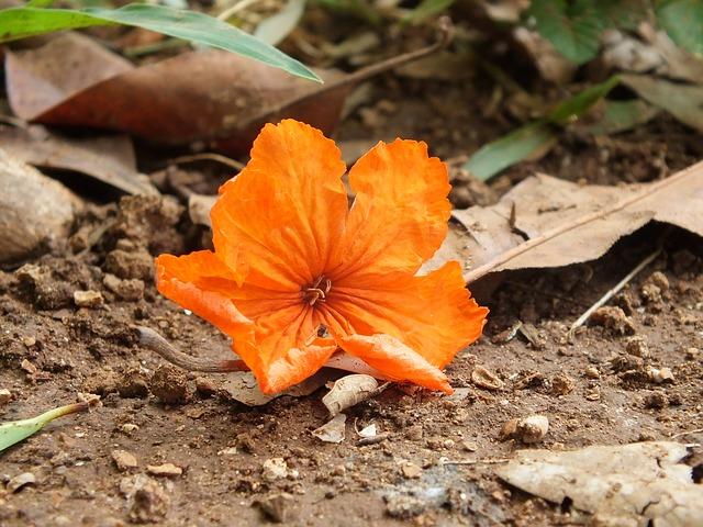 orange-184838_640