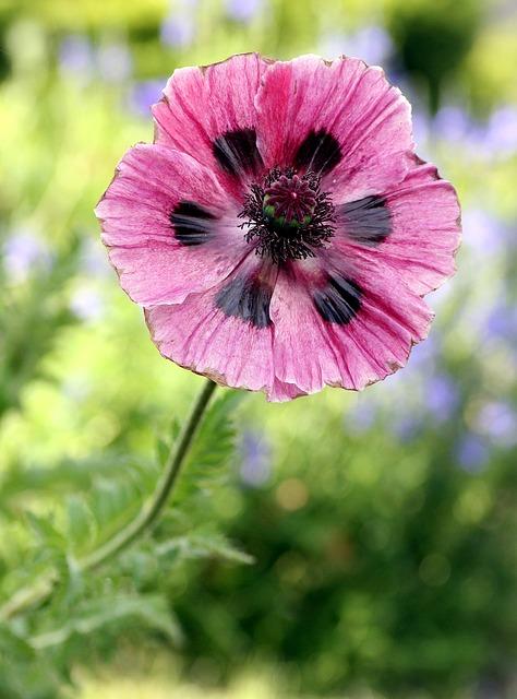 flower-1362855_640 (1)