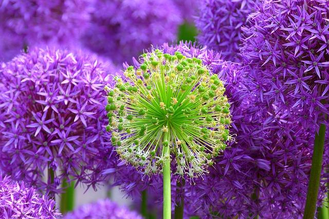 flower-139356_640