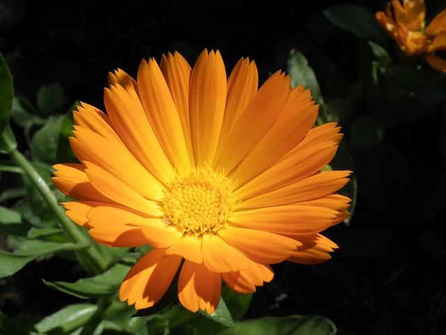flower-261001_640