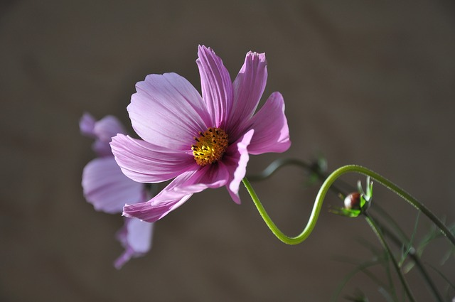 flower-639208_640