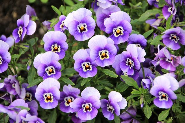 flowers-200270_640