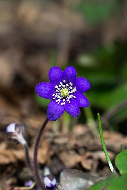flower-675132_640