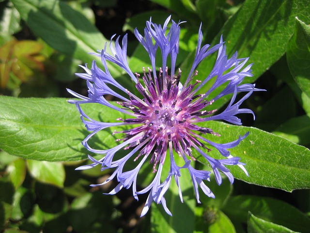 flower-98251_640