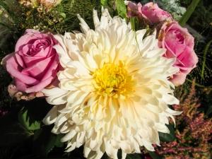 Jiřina s růžemi