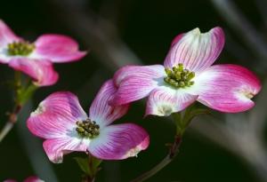 Okrasná květina
